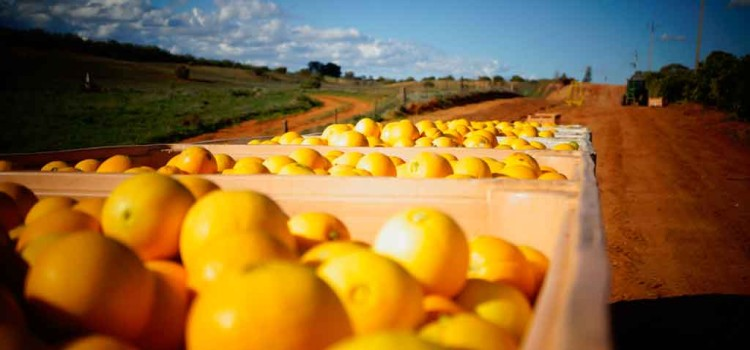 용감한 워홀, 농장체험 Citrus 추억 따러 오세요!