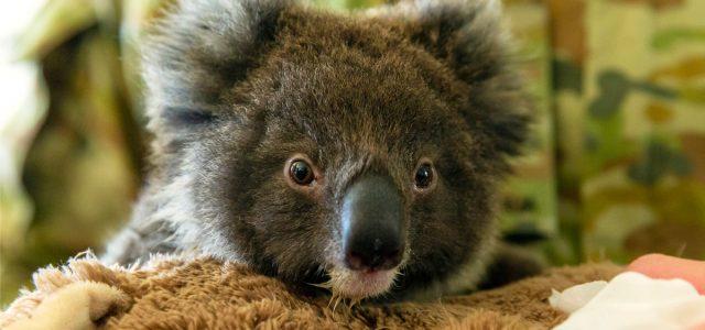 호주 산불로 숨진 야생동물 12억 마리 넘을 듯