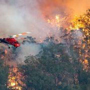 미래 산불 가능성을 낮추기 위해 사실 우리가 할 수 있는 일은 많다