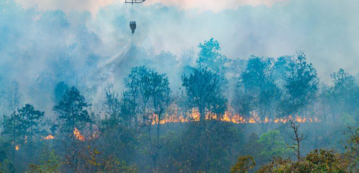 산불 연기로 445명 사망, 4000명 이상 입원