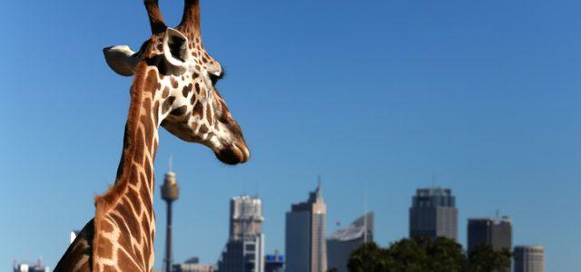 NSW 동물원, 수족관도 다시 문 활짝