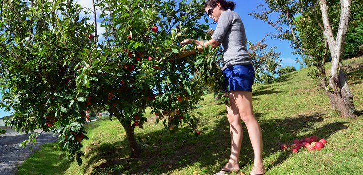 워홀러 없으면 농산물 비용 60% 인상 – 농업-관광계 연방정부에 워홀러 입국허용 호소