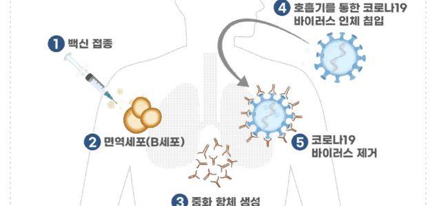 코로나19 백신의 예방원리와 종류!