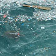 NSW 1회용 플라스틱 사용 2025년까지 절감